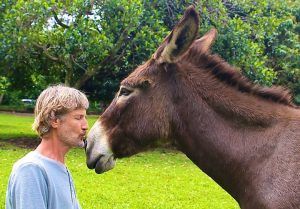 Donkey kissing1